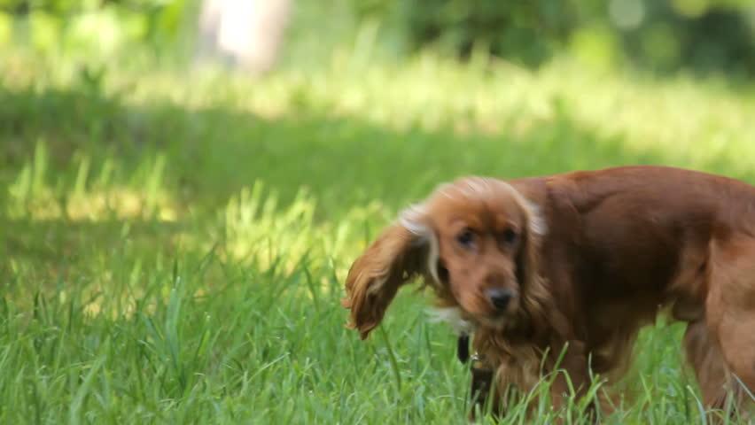 Girl walking with dog in meadow in summer   Shutterstock HD Video #6224699