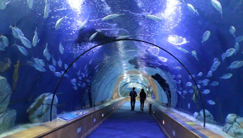 VALENCIA, SPAIN - APRIL 6 : People marveling the oceanarium tunnel of the biggest aquarium of the Europe - the one of Valencia, Spain on April 6th, 2014 in Valencian Spain