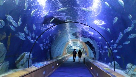 VALENCIA, SPAIN - APRIL 6 : People marveling the oceanarium tunnel of the biggest aquarium of the Europe - the one of Valencia, Spain on April 6th, 2014 in Valencian Spain