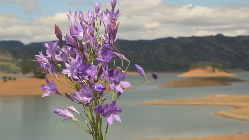 Bouquet Of Little Purple Flowers In Front Cloudy Sky And Lake Background Bell