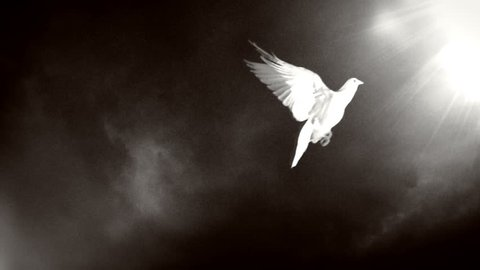 Dove of hope. Black and white