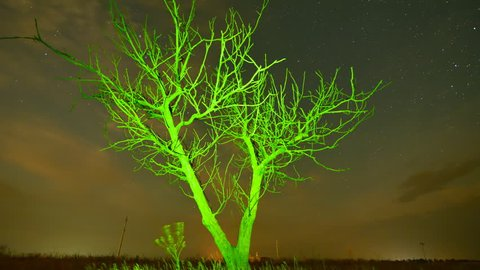 Starry night timelapse - alone tree silhoette on moving clouds and stars background