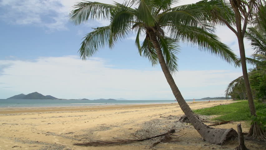Dunk Island Buildings: Mission Beach With Palm Tree Stock Footage Video (100