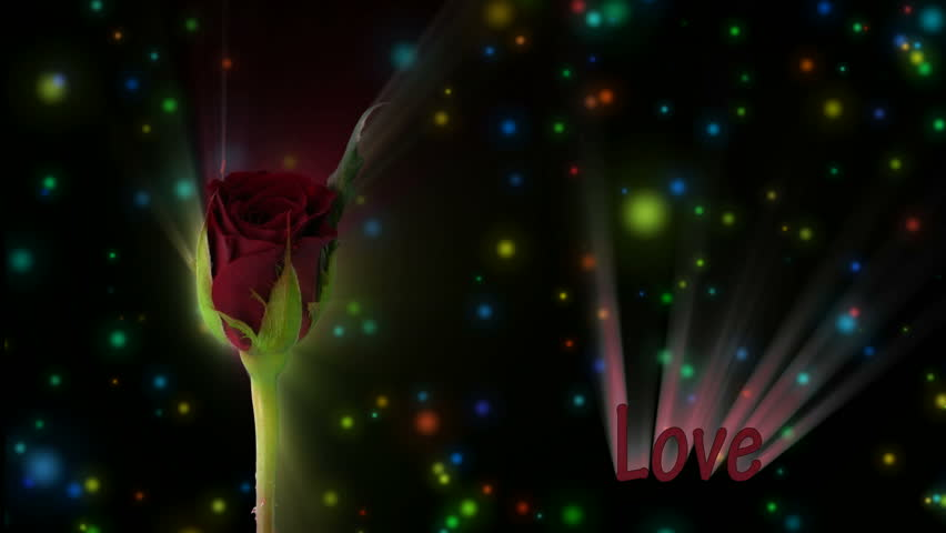 """Red rose """"Valentino"""" color meaning """"Love"""" 1a alpha matte  