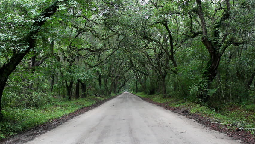 A beautifully eerie dirt road with tree canopy covered in Spanish moss on a rainy day & A Beautifully Eerie Dirt Road With Tree Canopy Covered In Spanish ...