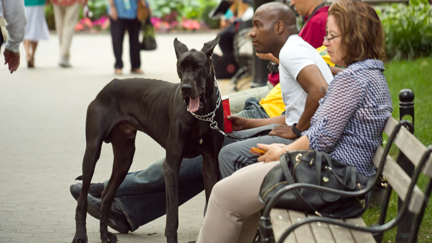 Image result for woman man dog park bench