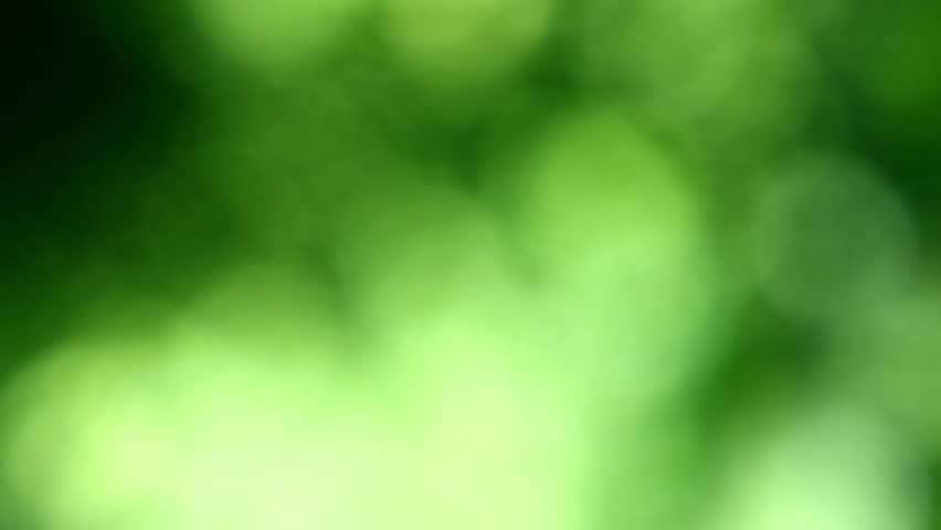 Defocused Abstract Nature Background With Green Leaves And