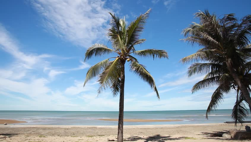 Coconut Palm tree on the white sandy beach | Shutterstock HD Video #6776959