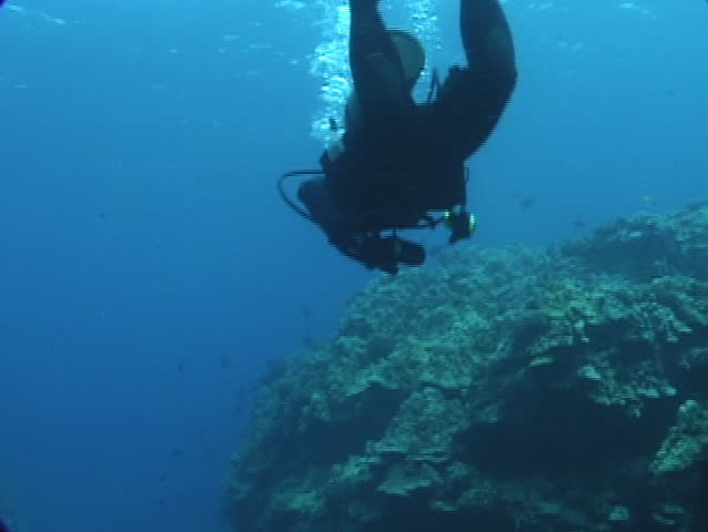 SCUBA Diver Dropping onto a Hawaiian Coral Reef