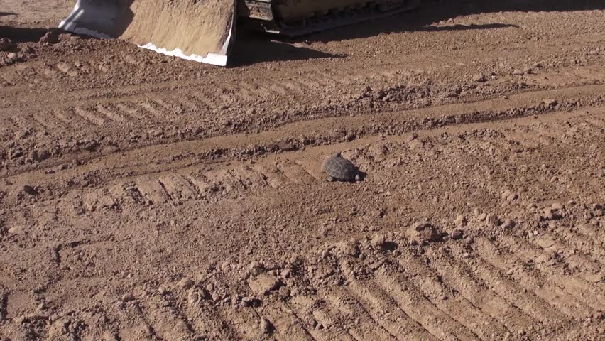 Las Vegas United States June 4 2014: Filming a safety video of the desert turtoise that is an endangered species. Desert Tortoise, Tire Tracks | Shutterstock HD Video #6919849