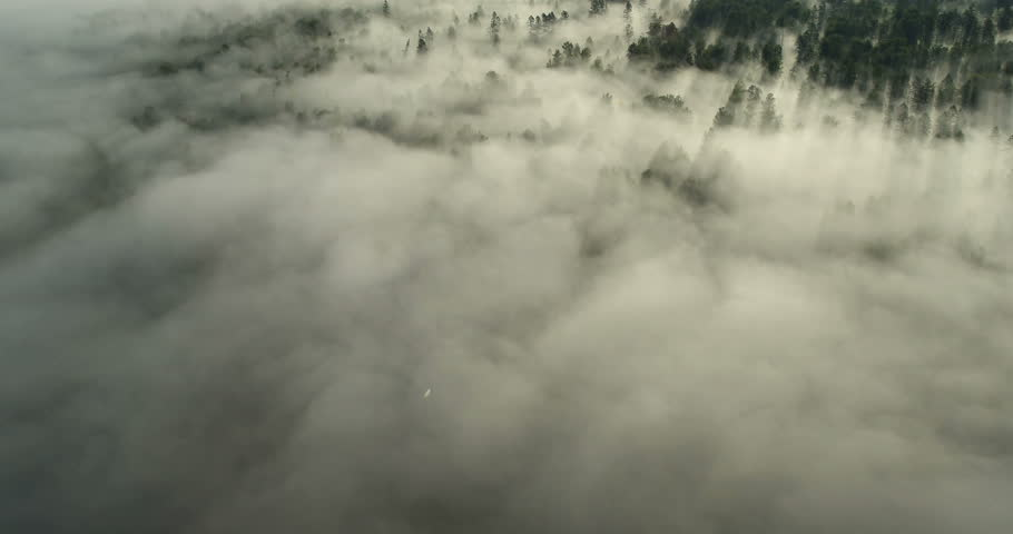 Aerial View: Flight over the Mountains. Altai. Siberia. Flying over the River. Forest Valley. Morning Fog. 4K resolution.