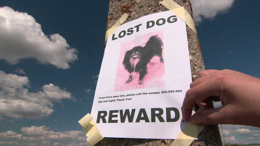 Lost Pet Sign Posting With Dog Image On A Pole   HD Stock Footage Clip  Lost Person Poster