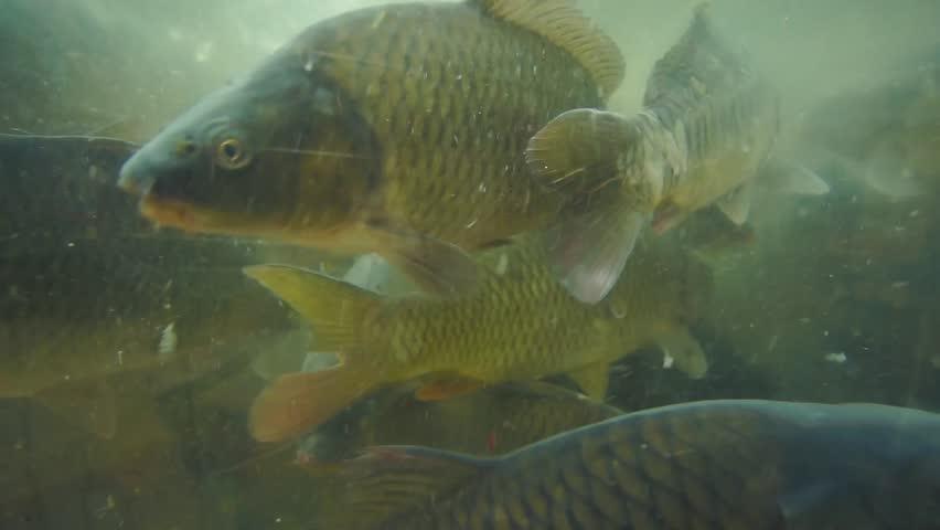 Huge fishes in aquarium in supermarket   Shutterstock HD Video #7010389