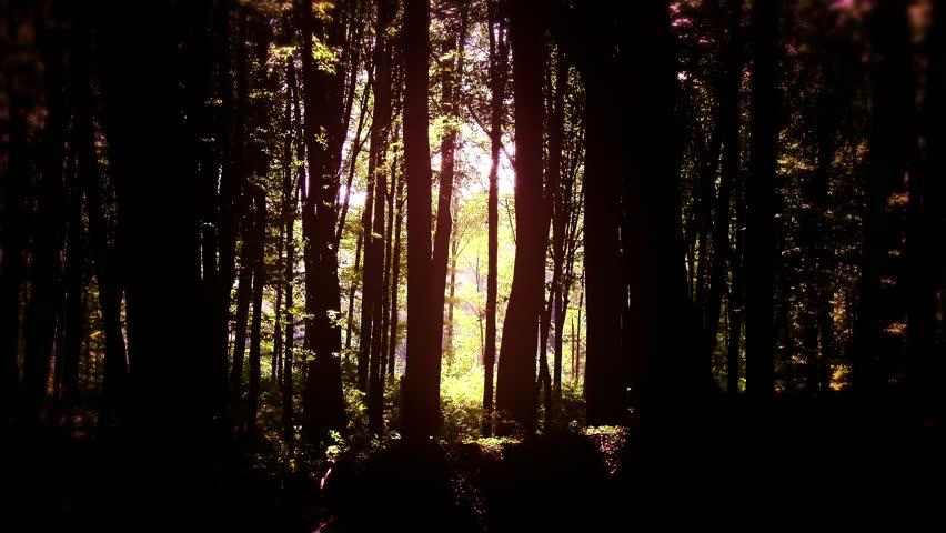4K Fairy Tale Magic Forest - Deep Woods 4K 3840 x 2160 ultra high definition | Shutterstock HD Video #7192519