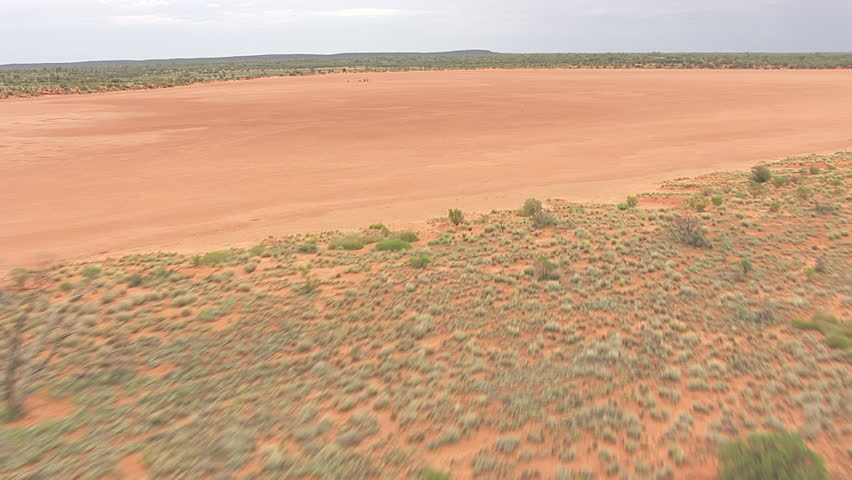Small herd of Australian Feral Camels in the sandy outback | Shutterstock HD Video #7198333