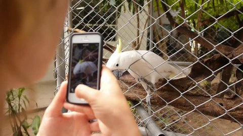 Young Woman Is Photographing Beautiful White Cockatoo, Sulphur-Crested Cockatoo (Cacatua galerita) by Her Cellphone in the Zoo. Koh Samui. Thailand. Crocodile Farm. Slow Motion. HD, 1920x1080.