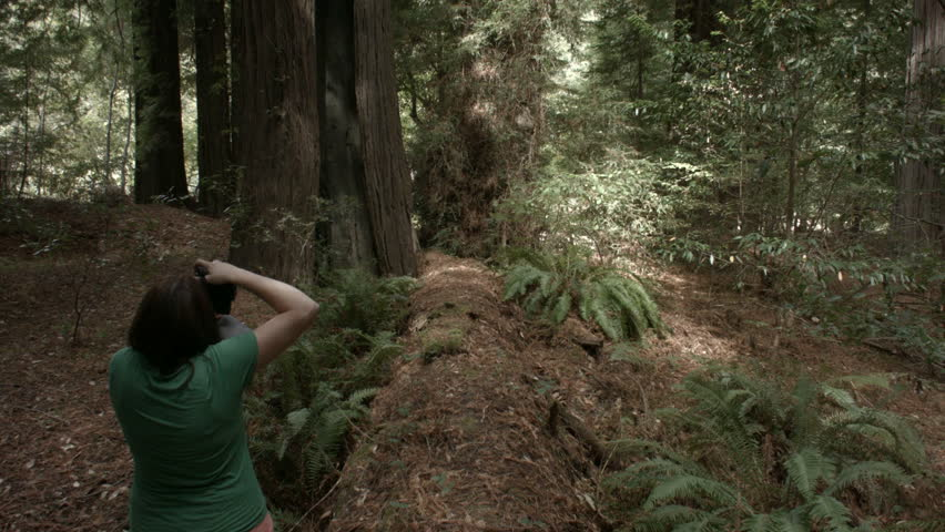 Lady taking a picture of giant redwoods. shot with a bmcc | Shutterstock HD Video #7554079