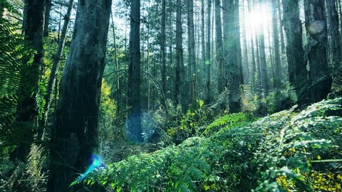 4K Dolly shot into beautiful deep forest with sun rays shining