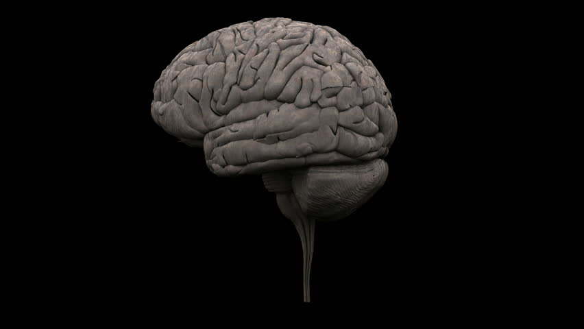 Textured 3d human brain on black background spinning to - Brain wallpaper 3d ...