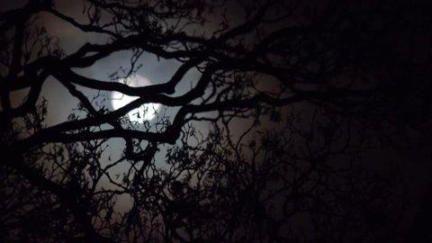 establishing shot spooky atmospheric moonlight through tree branches