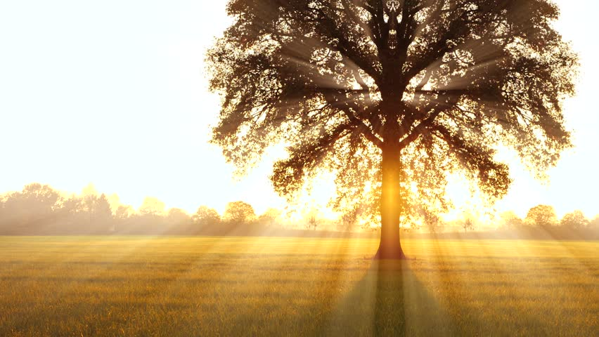 Tree of Life Background. Sun Stock Footage Video (100% ...