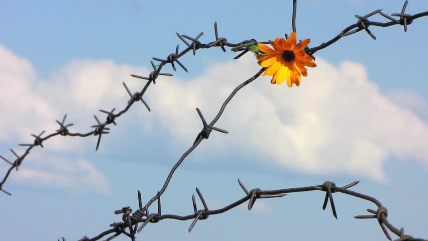 Flower Barbed Wire - WIRE Center •