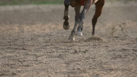 close up of the horse's hooves which quickly jumps during the race, slow motion fs700