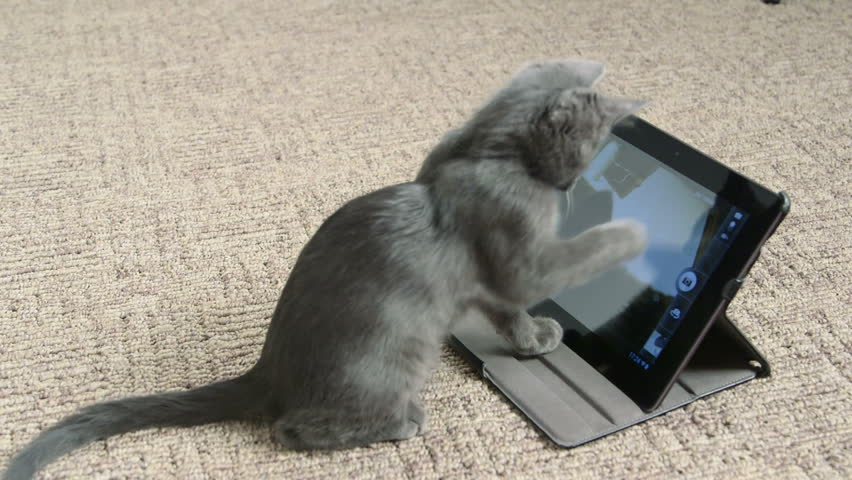 Cute kitten playing with digital tablet computer taking selfie