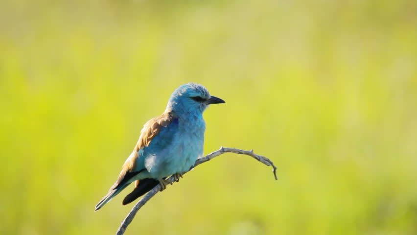 Exotic bird in nature, blurred background | Shutterstock HD Video #8501437