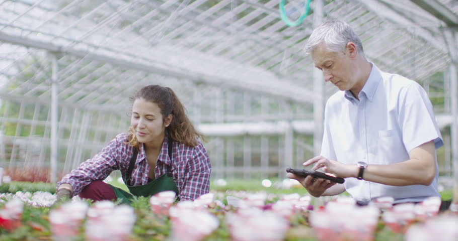4K Team of workers in the agricultural industry at work in a large plant nursery greenhouse