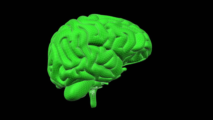 looping xray brain with alpha matte isolated hd stock video clip