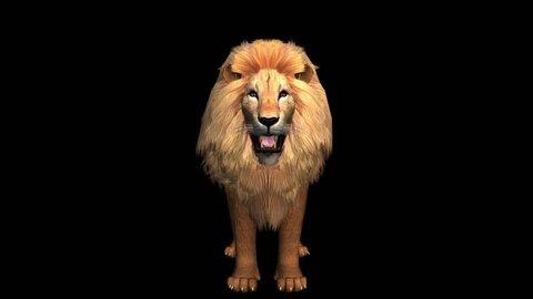 Lion howl trumpet,Endangered wild animal wildlife. cg_02471