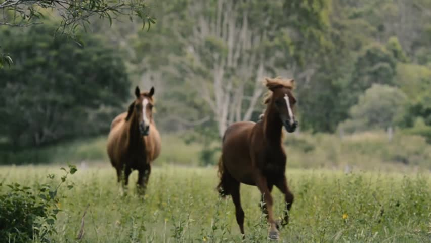 Single horse galloping in the outback