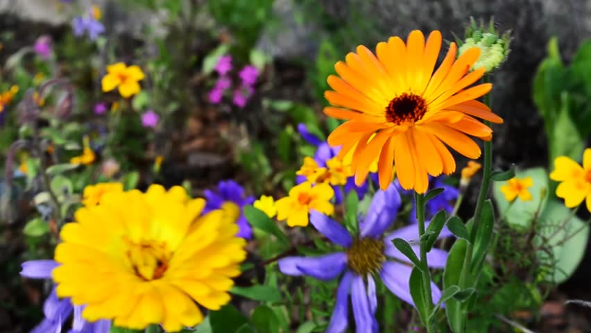 scenery hd flowers spring flower nature springtime sweden shutterstock exotic clip blurred two