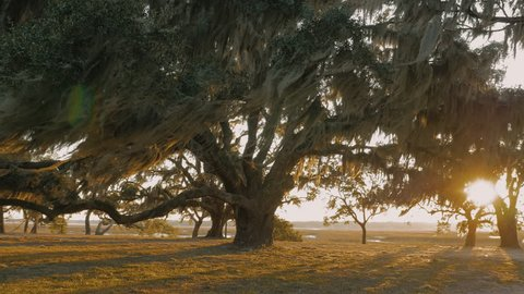 Beautiful 4k Stock video of a live oak tree in South Carolina, the deep south, sun shining through the branches, camera dolly around tree.
