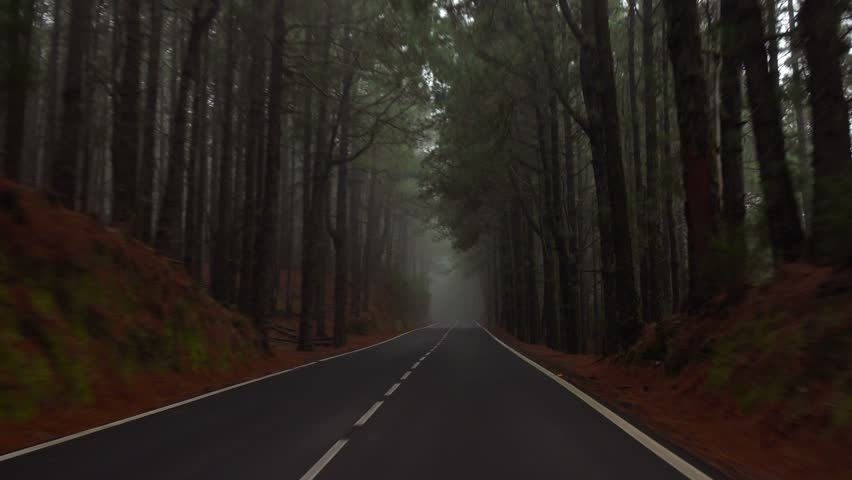 POV. Driving under canopy of misty pine forest, Tenerife, Canary islands.
