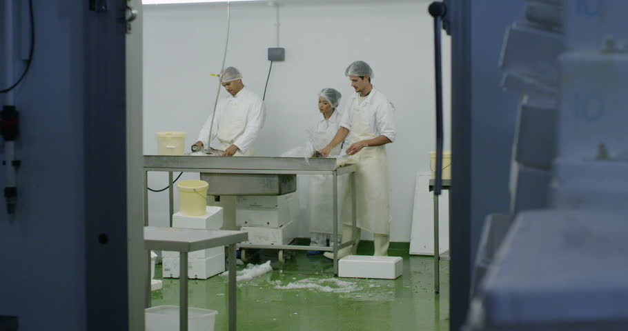 4K Workers in a seafood processing factory, preparing fresh fish for sale.