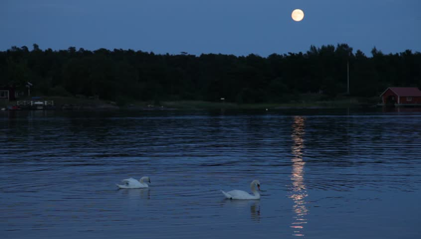 Swans By Moonlight >> Night Over Swedish Bay With Moon And Swans Moonlight Reflection