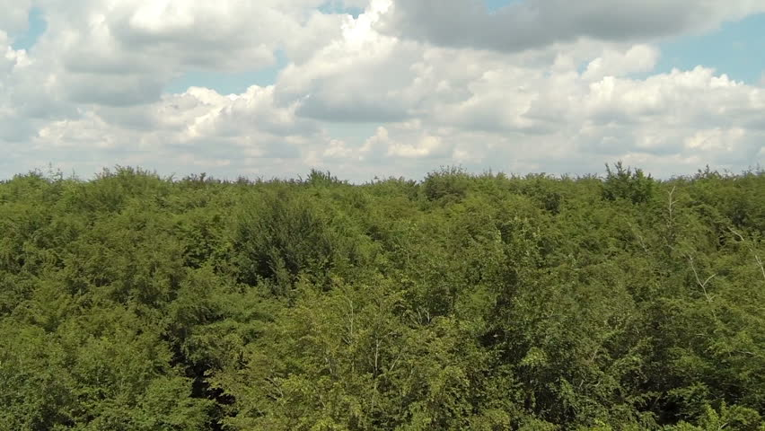 Aerial View Of UK Woodland And Forest. British Countryside And Tree Top Canopy. Stock Footage Video 8993749 | Shutterstock & Aerial View Of UK Woodland And Forest. British Countryside And ...