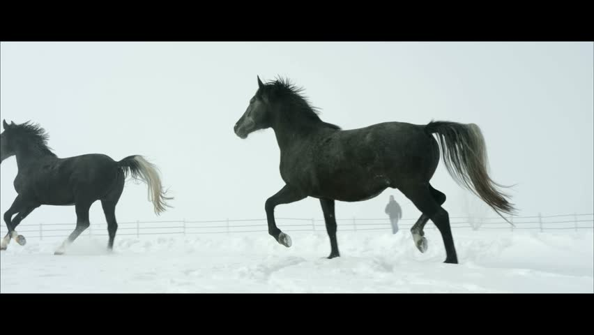Horses galop outdoor in slowmotion during a Cold Winter weather   Shutterstock HD Video #9011254