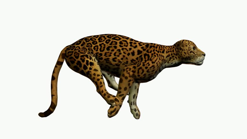 Animated cheetah print