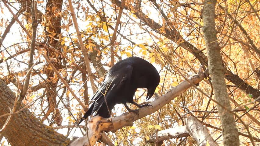 Raven Black Videos