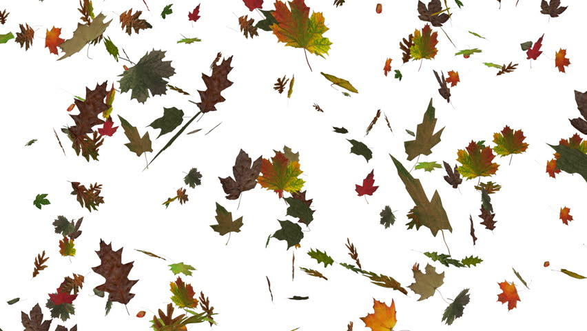 Image result for dry leaf