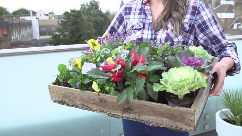 slow motion sequence as woman lifts up tray of plants on rooftop gardenshot on