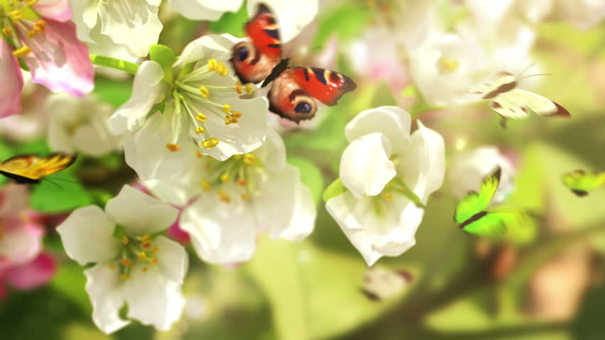 Blossoming flowers and butterflies, 4K. beautiful 3d animation.