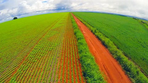 Aerial View from Soybean Plantation, Brazil