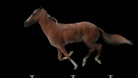 Red horse runs gallop. Isolated and cyclic animation.