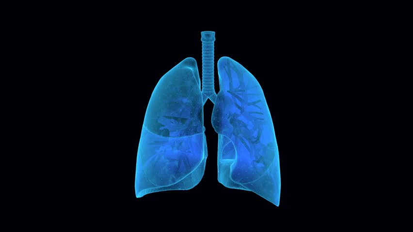 X-Ray y Anatomy of human Lungs in blue