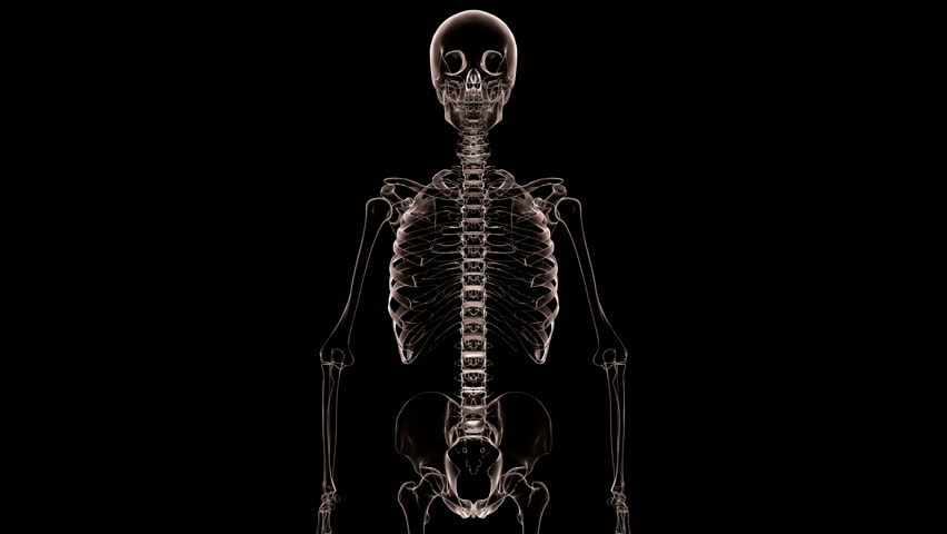 torso of a skeleton x-ray rotating. seamlessly loops. stock, Skeleton