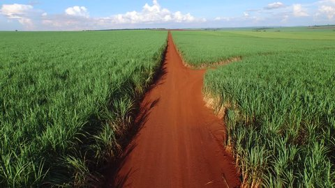 sugar cane plantation in sunny day in Brazil -  aerial view - Canavial